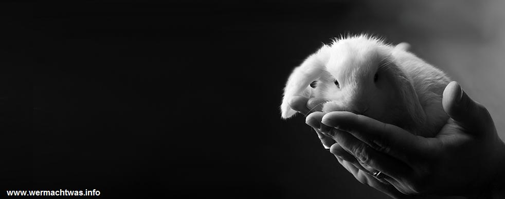 Produkte mit und ohne Tierversuche